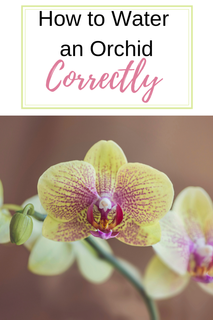 How to water your orchids
